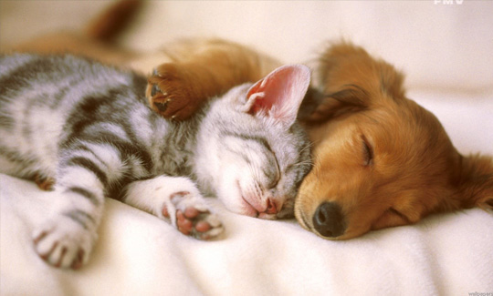 anxiety relief from pets
