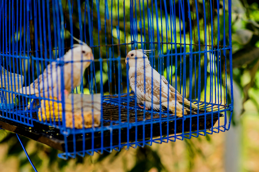 Why You Should Pick Birds Over Four-Legged Friends