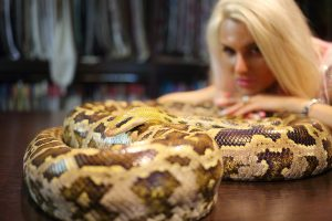 Pretty woman touches big snake on wooden table indoor, focus on