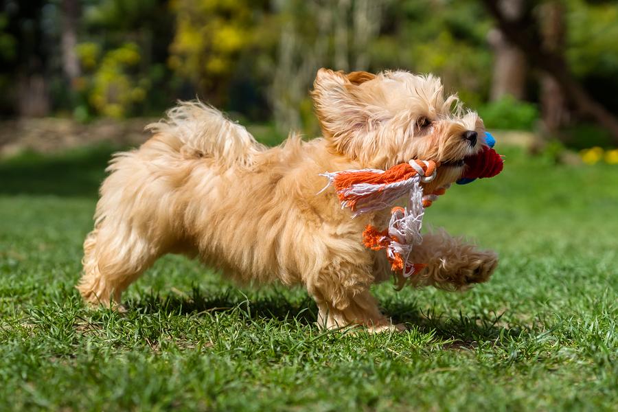 Crazy Dog Behavior – Why Do Dogs Do What They Do? – Part 2