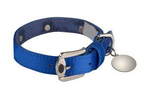 dog collar isolated