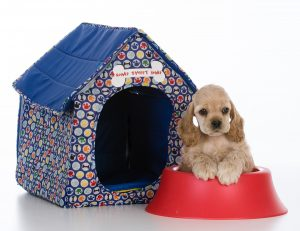 cocker spaniel puppy with a dog house and dish