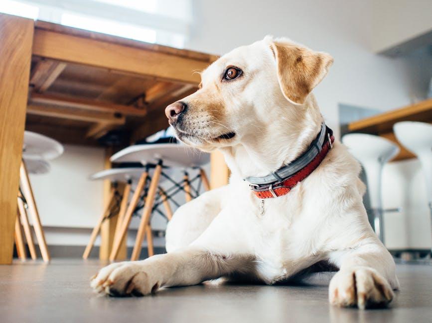 5 Accessories You Should Invest in for Your Dog