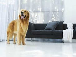 dog in home
