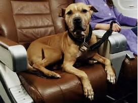 esa dog on airplane