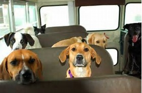 dogs sitting on a bus