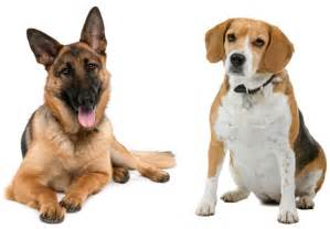 The Top Low-Maintenance Dog Breeds