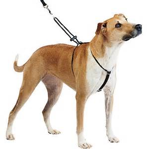 A Guide to Selecting a Dog Harness