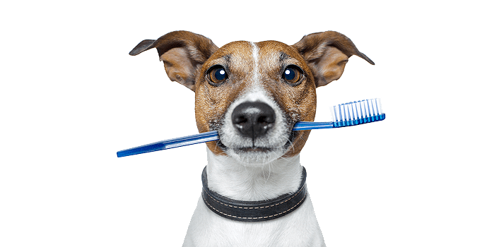 How to Pick the Right Toothbrush for Your Dog