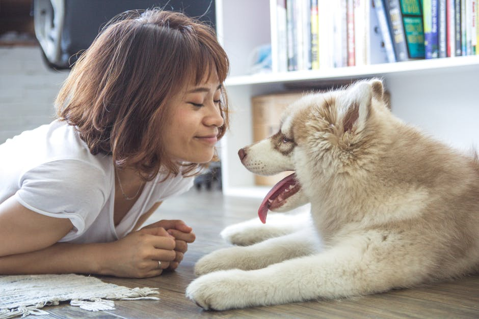 An Overview of Emotional Support Dog Identification