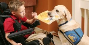 service dog with boy