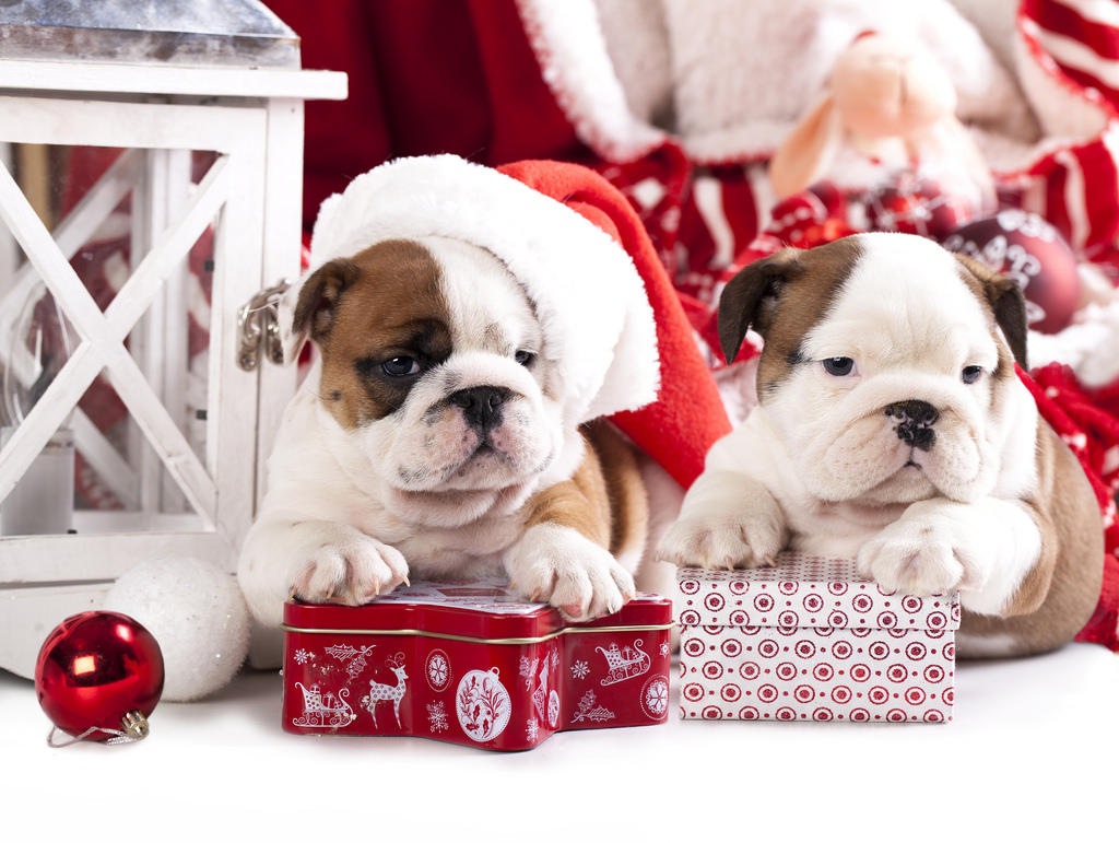 The best Christmas treats for your Emotional Support Animal