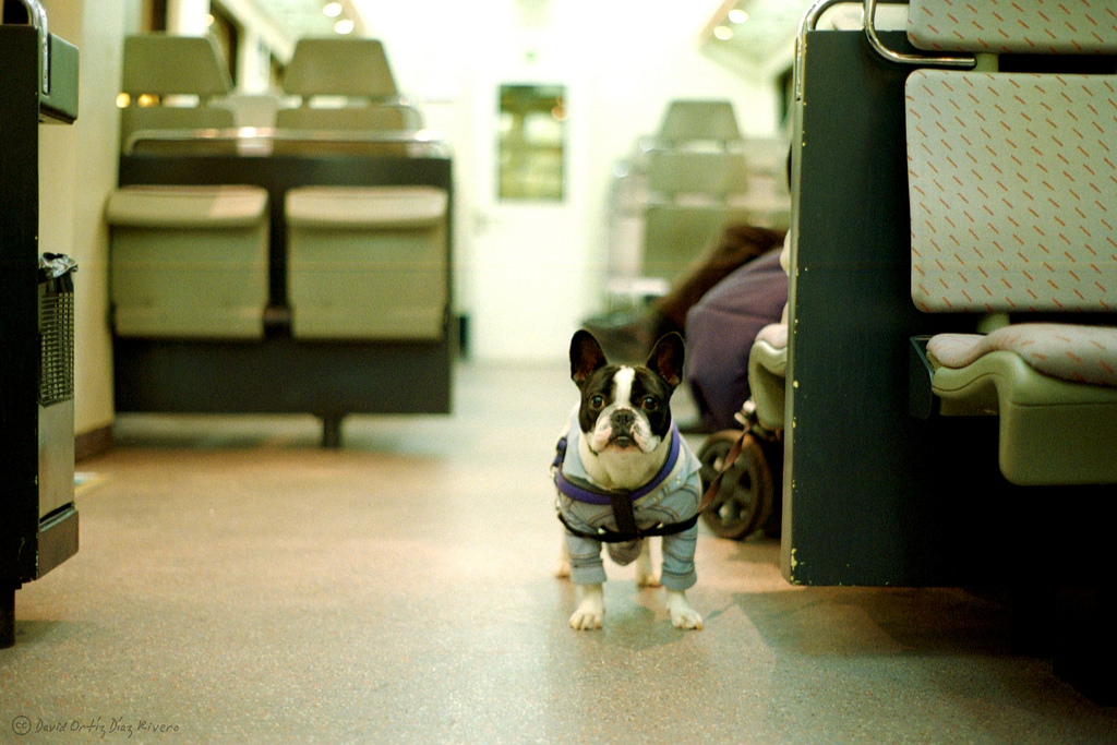 Preparation – The Key to keeping your Pets Safe on a Flight