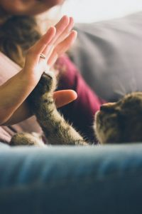 high five with pet